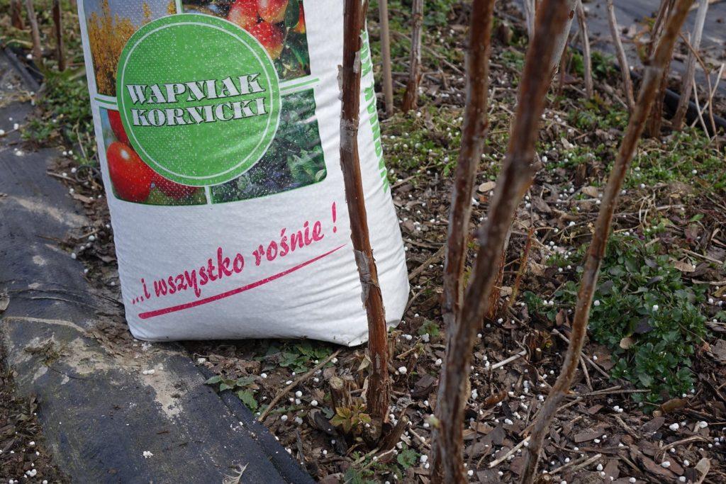 Wapnowanie plantacji maliny najlepiej wykonać jesienią