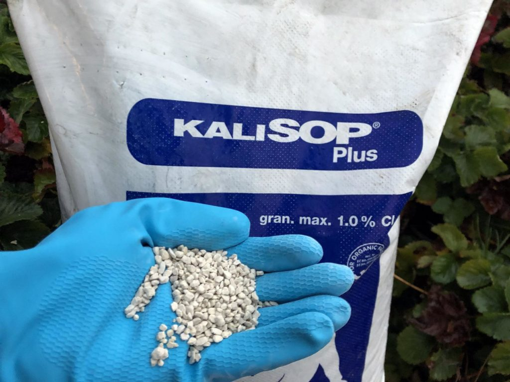 Zawartość potasu i magnezu w glebie uzupełniamy jesienią