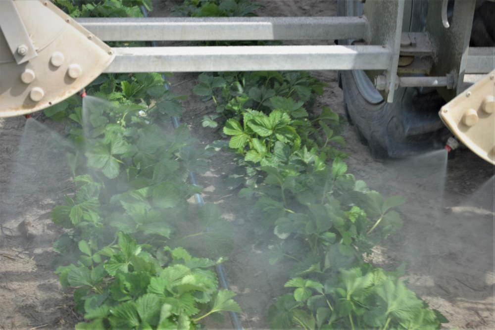 obraz przedstawia sposób na ochronę roślin w okresie kwitnienia