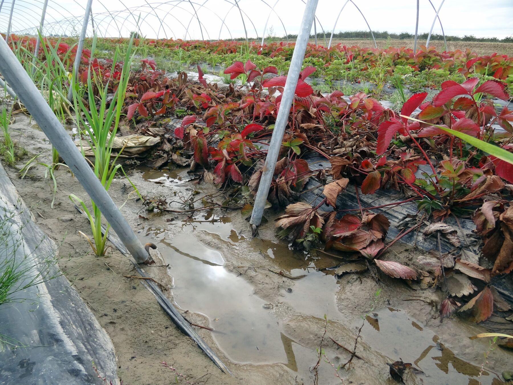 Zabiegi regenerujące system korzeniowy po intensywnych opadach deszczu