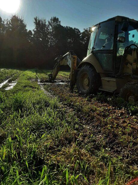 Reanimacja systemu korzeniowego truskawki po zalaniach i podtopieniach